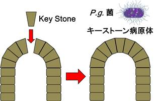 キーストーン病原体.jpg