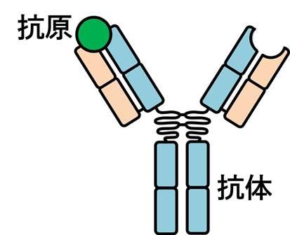 抗原抗体反応.jpg