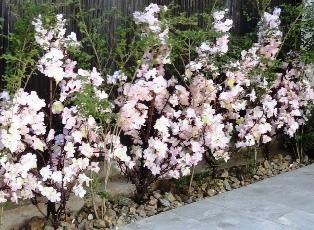 春のよそおい2.JPG